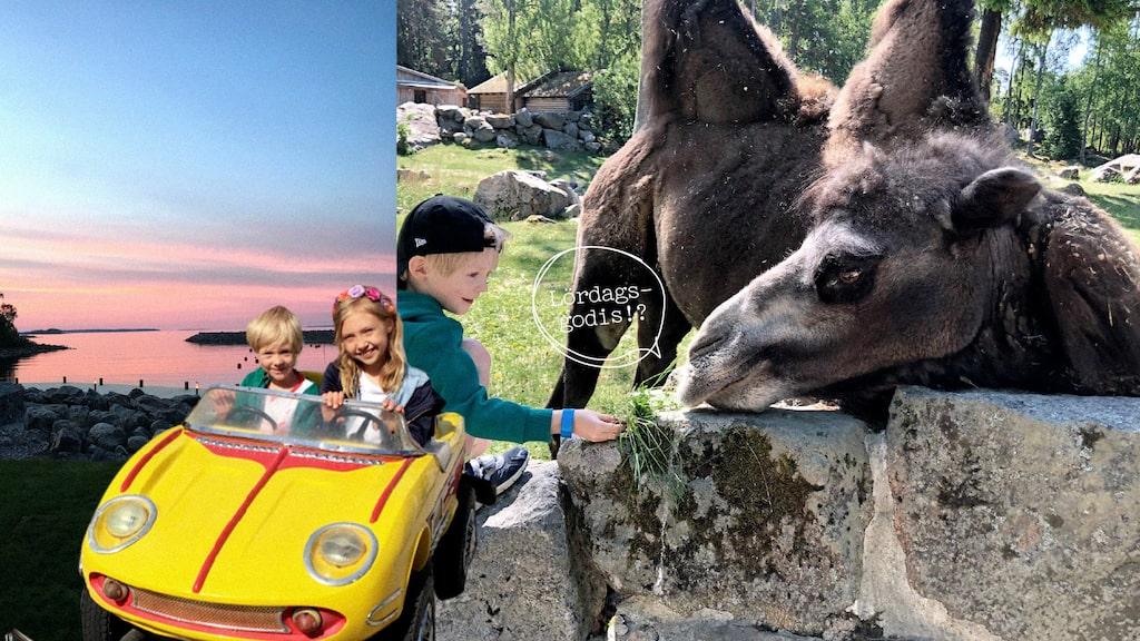 I Furuvik kan man både hälsa på djur och åka karusell!