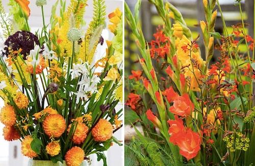 Gladiolus är en utmärkt snittblomma. Odla dem som snittblommor.