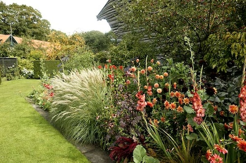 Gladiolus planterad direkt i en rabatt. Här syns fler knölväxter som ska tas upp på hösten, som några dahlior.