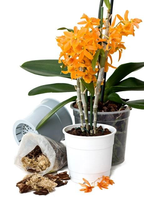 Vilken kruka och vilken jord ska orkidéerna ha?