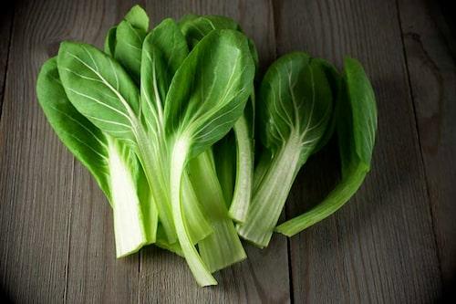Många asiatiska bladgrönsaker, som tatsoi på bilden, tål kyla och går bra att odla på hösten.