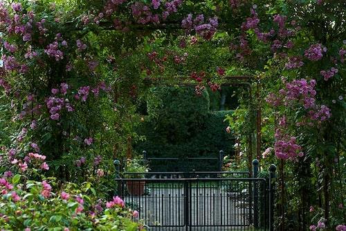 Ingång till rosenträdgården i Fredriksdal.