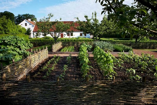 Köksträdgården som odlas ekologiskt och traditionsenligt i 1800-talsanda.