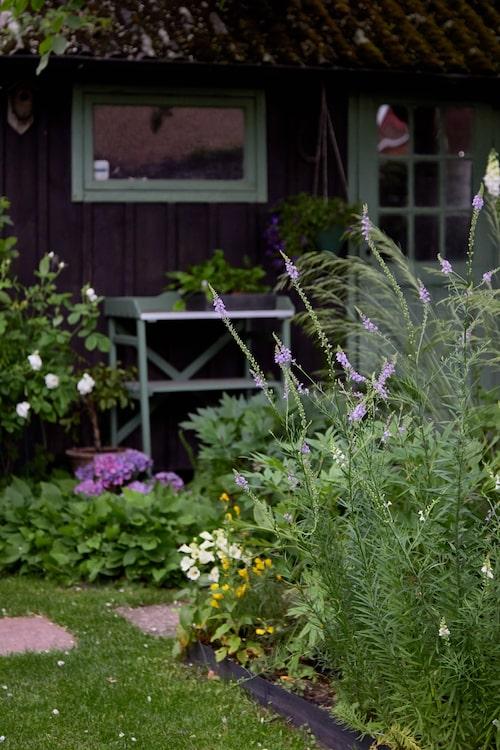 Mot väggen till ett av uthusen har Karin ställt ett planteringsbord. Det har samma gröna färg som andra snickerier och smälter perfekt in i miljön.
