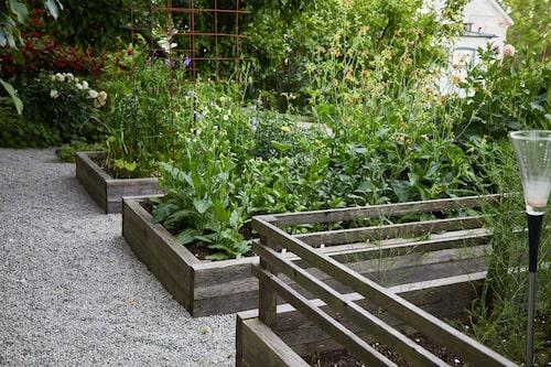 I köksträdgårdens odlingsbäddar växer främst dahlior, sparris, kryddväxter och olika sommarblommor.