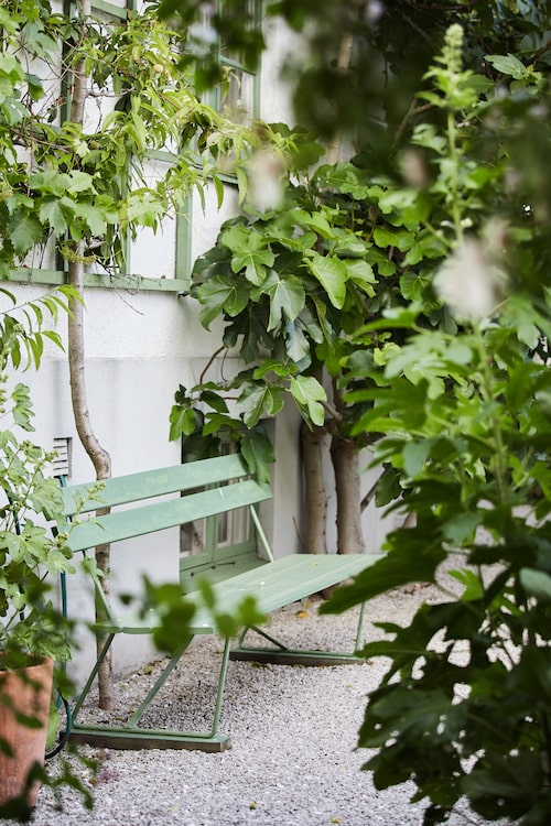 Den gröna bänken mot huset mellan persikan och fikonet smälter fint in i grönskan.