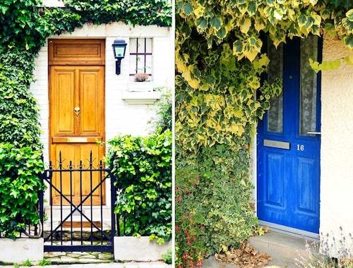 Murgröna kan täcka in en fasadvägg effektivt, men iaktta viss försiktighet och håll efter rankorna.