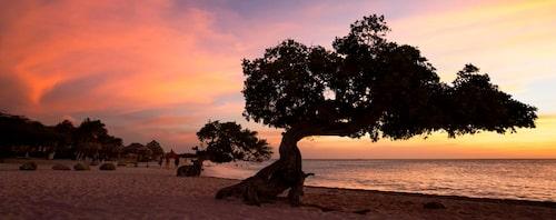Divi divi-träden beundrar solnedgången.