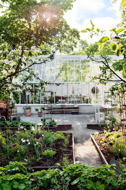 Det började med en dröm om ett växthus som skulle passa deras sekelskiftetshus. Drömmen växte ut till ett företag, Sweden green house. I sitt växthus odlar Eva Halfwordson tomater, gurka, squash och olika kryddväxter.
