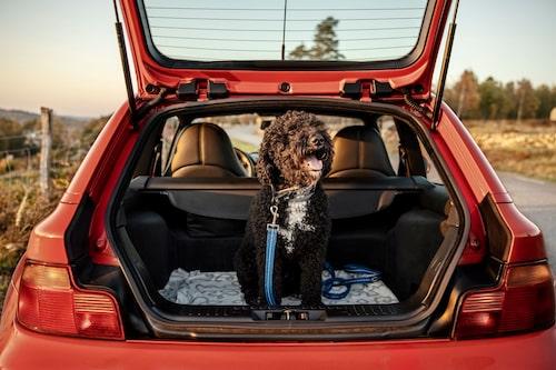 I vilken annan tvåsitsig sportbil kan du ha en (välmående) hund i bagageutrymmet?