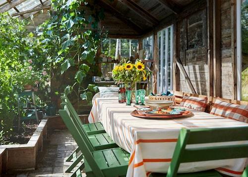 I växthuset har familjen skapat en matplats för att kunna utnyttja utrymmet maximalt. Ett bra tips är att inte glasa alla ytor av huset, det skapar lite mer ombonad känsla och värme med en vägg. Rutiga kuddar från Pierre&Peter's.