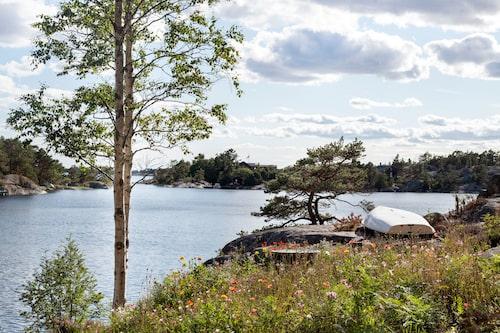 En skyddad, grund havsvik med otuktad natur: en fin inramning för ettrofyllt sommarliv.