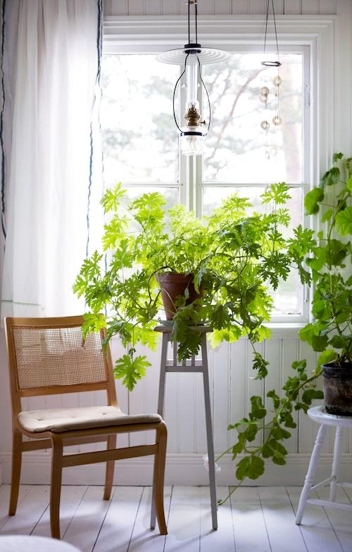 Växterna trivs i sovrummets burspråk, där solen flödar in.