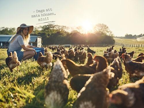 Friska djur behöver inte behandlas med antibiotika, och då minskar risken för resistens.