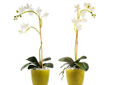 Orkidéer tål inte minusgrader!Tänk på det när du fraktar dem från affären och när du vädrar.