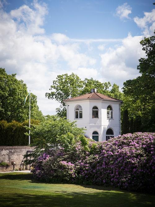 Palmhuset i ett hav av blommande rododendron. Huset byggdes på 1930-talet för att agera utsiktstorn mot parkens tennisbanor under sommaren, och som orangeri åt exotiska växter på vintern.
