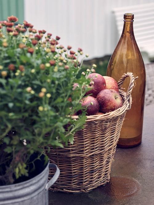Höstäpplen som stilleben på altanbordet. I år har varit ett riktigt bra äppelår till skillnad mot förra säsongen.
