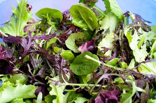 Salladsmix med baby leaf kan innehålla sallat men även andra blad.