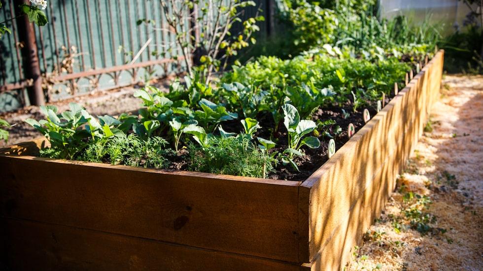 Det finns planeringsprogram för köksträdgårdar som man kan ladda ner från nätet, några gratis eller med gratis testtid.