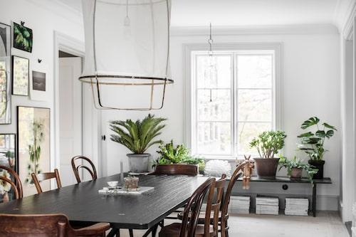 Mixen av vintagestolar och gröna växter ger matsalen en varm karaktär. Plats för många runt bordet av Per Söderberg/