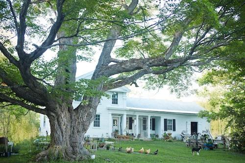 En 300 år gammal lönn skuggar boningshuset på Sarah Ryhanens gård, döpt till World's end, efter hennes favoritroman av T C Boyle. Här har hon skapat en pastoral idyll vigd åt blommor, djur och kreativt skapande.