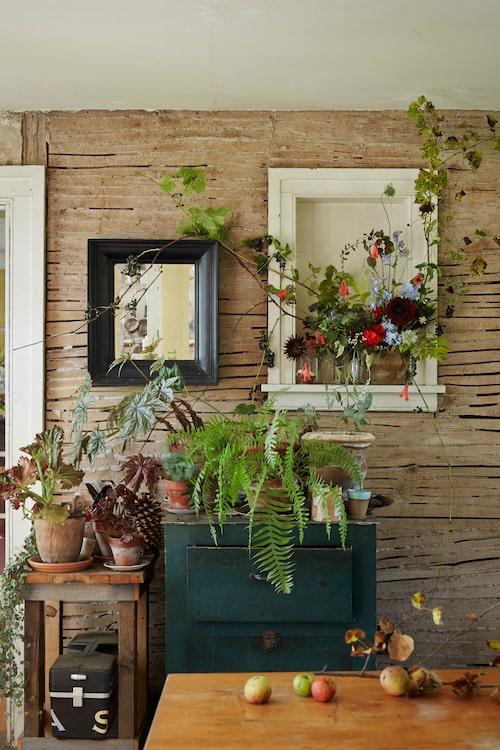 Krukväxter, snittblommor, kvistar, kottar och äpplen. I Sarahs hem bildar de fint färgstämda stilleben.