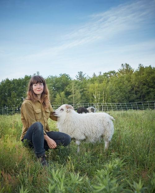 De isländska fåren spelar en viktig roll i gårdens kretslopp.