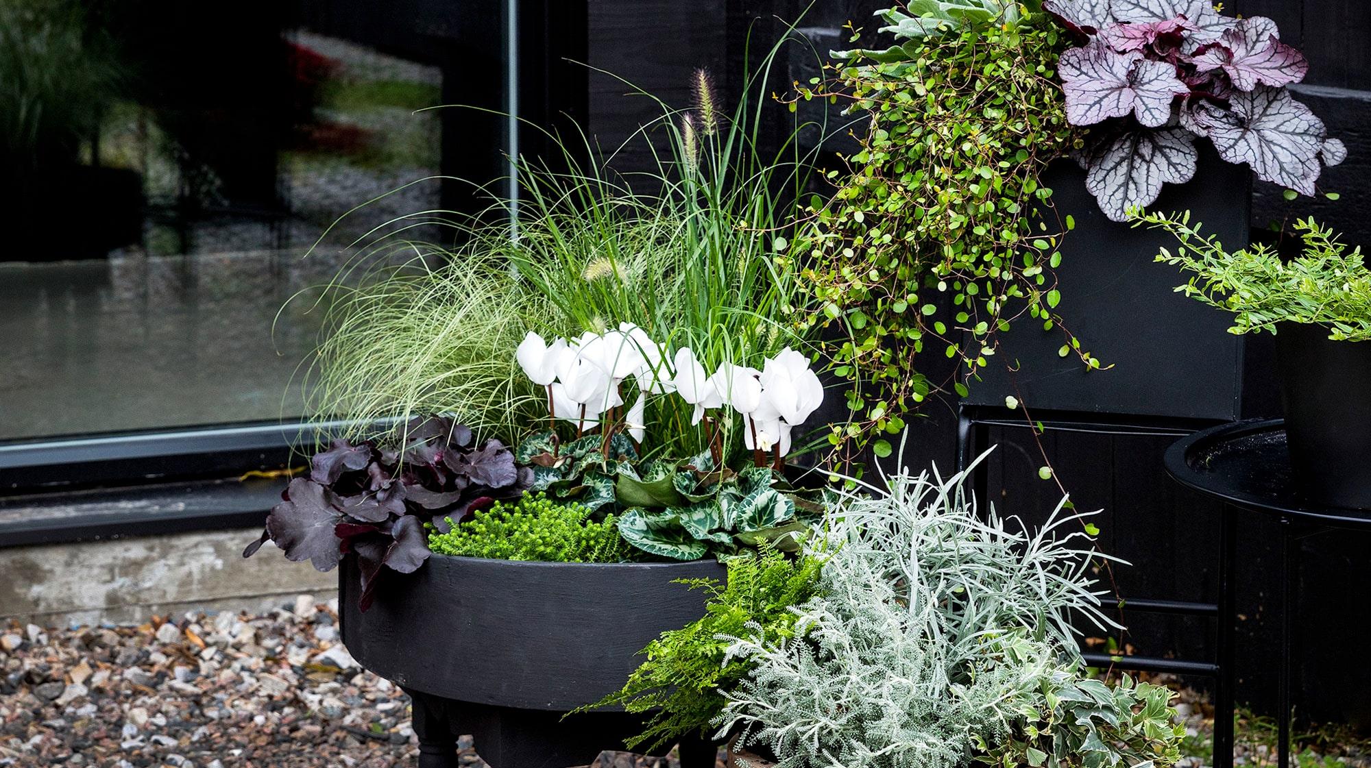 tåliga växter balkong