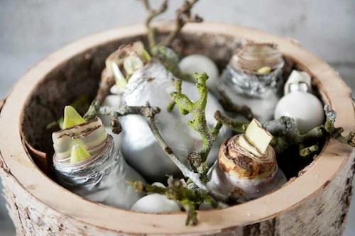 Silvriga och guldfärgade vaxade jullökar i en skål. Så småningom kommer blommorna.