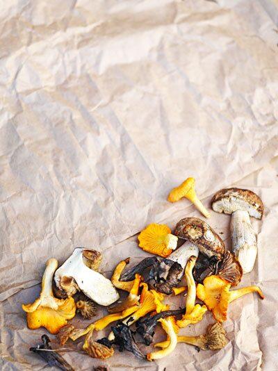 Det finns 1,5 miljoner olika svampsorter. Ett hundratal används som matsvamp. På bilden ser ni bara ätbara svampar: Karljohan, trattkantarell, gul kantarell och svart trumpetsvamp.