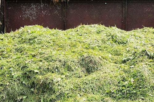 Gräsklipp kan läggas uppe på ytan för jordförbättring.