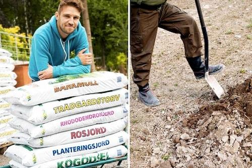 Det går bra att jordförbättra en mager jord eller förbättra strukturen med påsjord eller organiskt material.