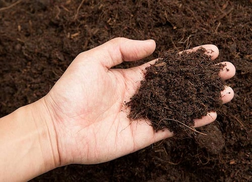En färdigbrunnen kompost ger fin struktur när man jordförbättrar.
