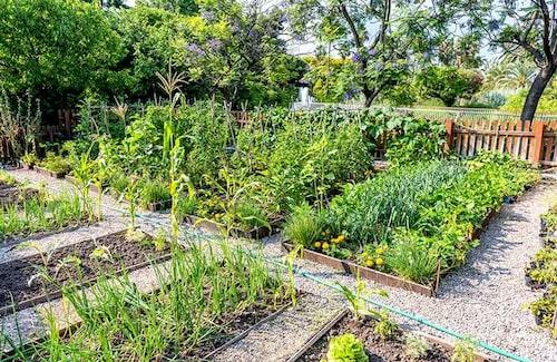 Placera köksträdgården på det soligaste stället.