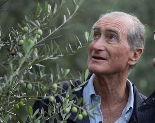 Fernando Di Luca är italienaren som tog olivoljan till Sverige.