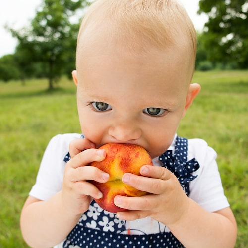 Om barnet har björkpollenallergi kan det klia i munnen när det äter kärn- och stenfrukter som äpple och persika.