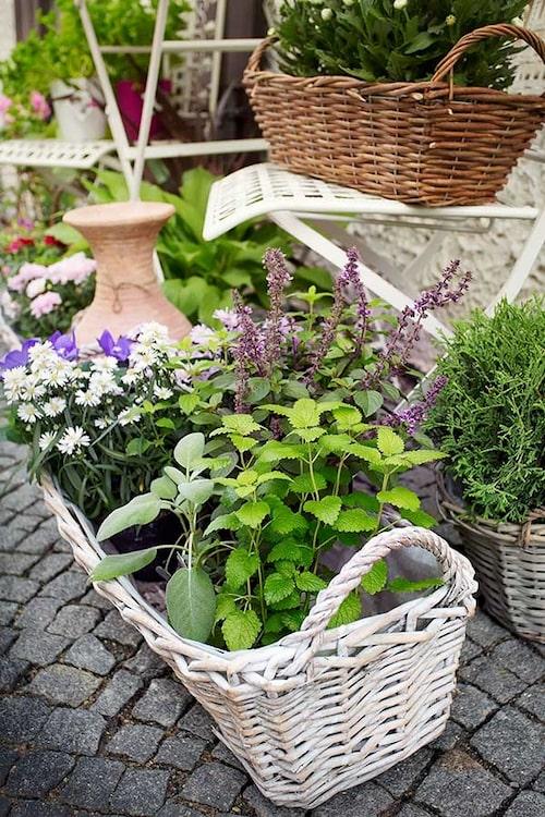 Fint arrangemang där man mixat kryddväxter med andra blommor.