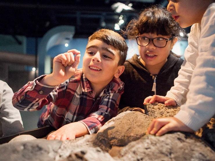 Är ditt barn inne i en dinosaurieperiod? Då är Naturhistoriska riksmuseet perfekt att besöka på höstlovet!