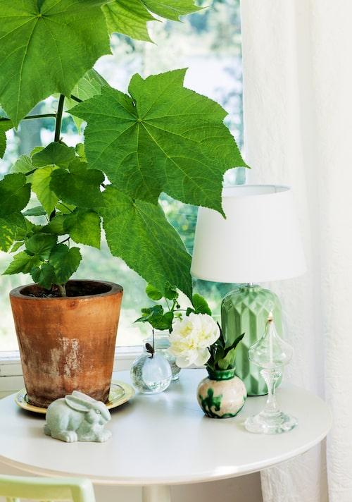 I krukan står en rumslind. Lampan är en gåva. Glaset med veke, den lilla keramikvasen och keramikharen är loppisfynd. Den lilla glasvasen är från Svenskt tenn. Bordet är från Ikeas 1700-talsserie.