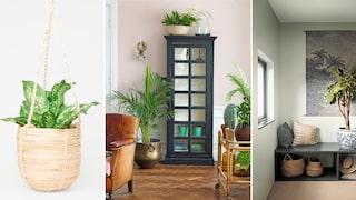 Så inreder du ditt hem med gröna växter