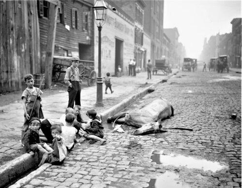 Under 1800-talet blev hästarna i de stora städerna ett allt större problem och ett hot mot människors hälsa. De bajsade och kissade enorma mängder. Hästar dog framför kärrorna och blev liggandes i dagar som på bilden från New York. Folk upprördes över djurens lidande.