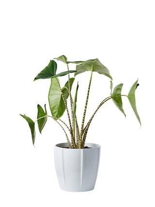 fina gröna växter