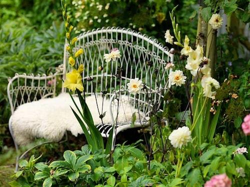 Vita dahlior och gula gladioler