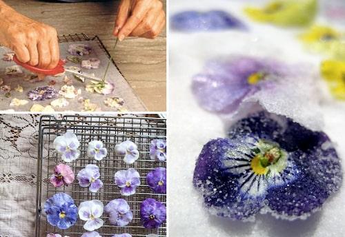 Kanderade violer för desserter och bakverk.
