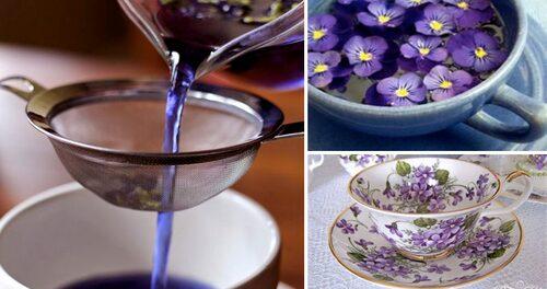Recept på örtte med luktviol, både torkade och färska blommor och blad.