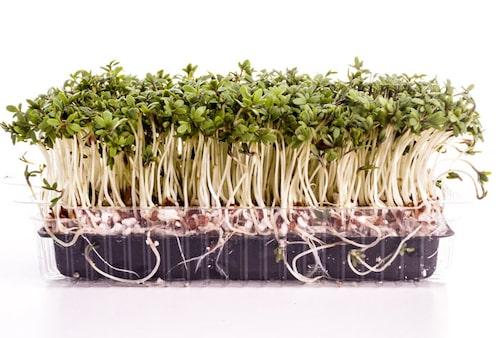 Mikroblad odlat i tråg, ser ut som återvunnen grönsaksförpackning.