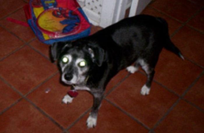 Den mycket saknade hunden - Abbey.