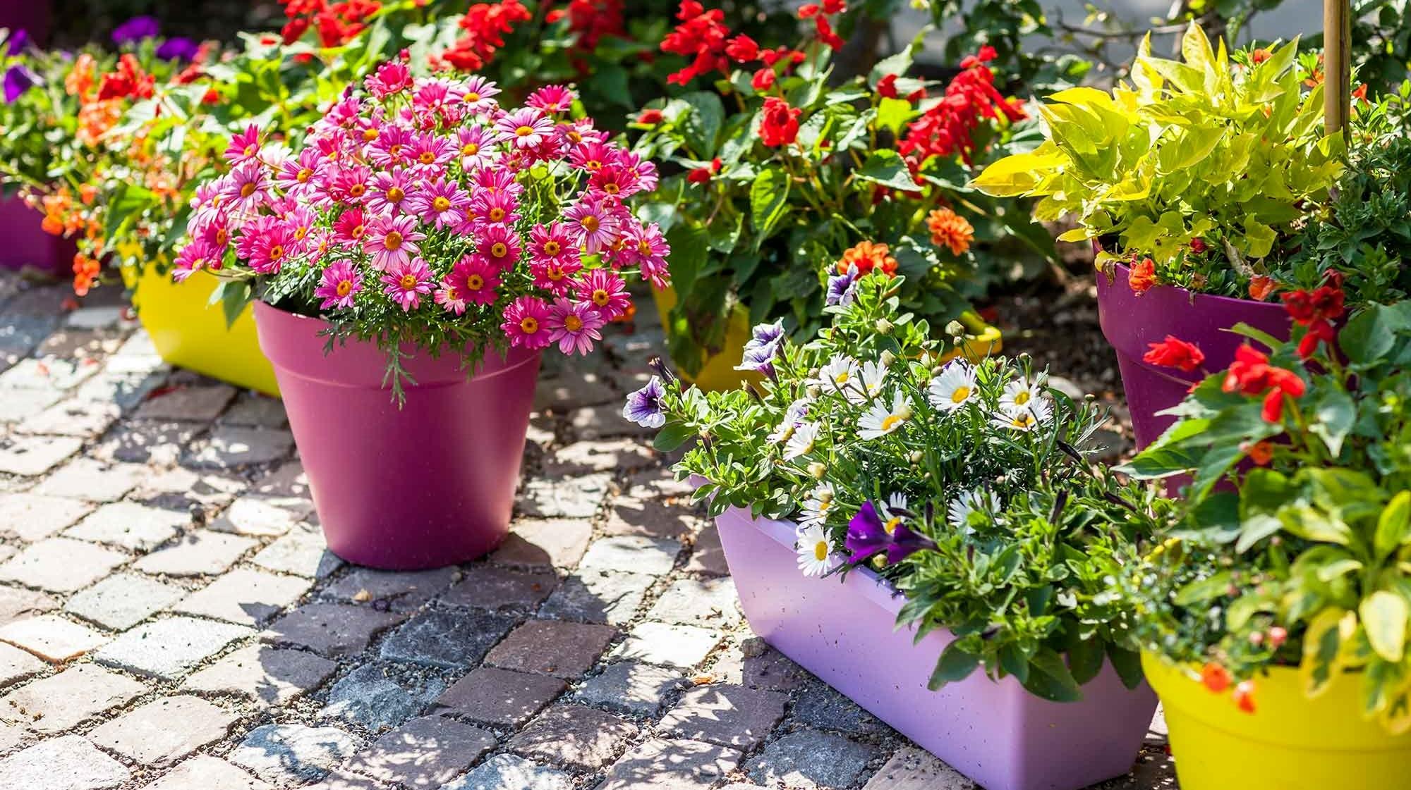 odla blommor utomhus