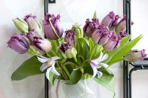 Romantisk tulpanbukett med lila franstulpaner och klematis.