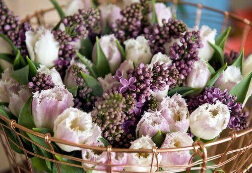 Ljuvliga rosa tulpaner med syrener.